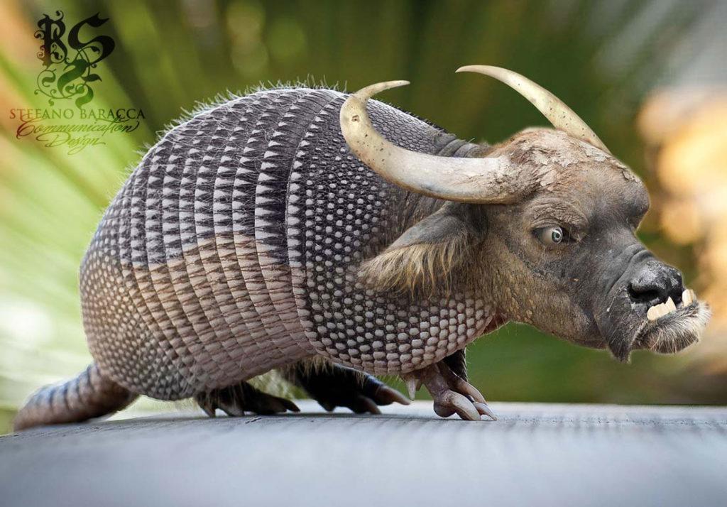 Armadillo con la testa di bufalo