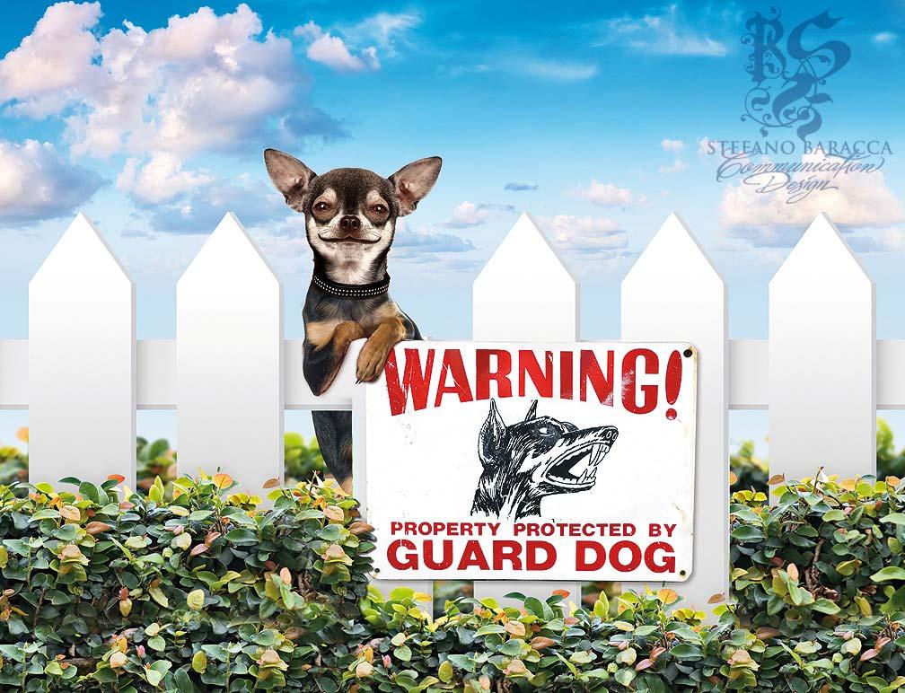 Cane da guardia poco serio