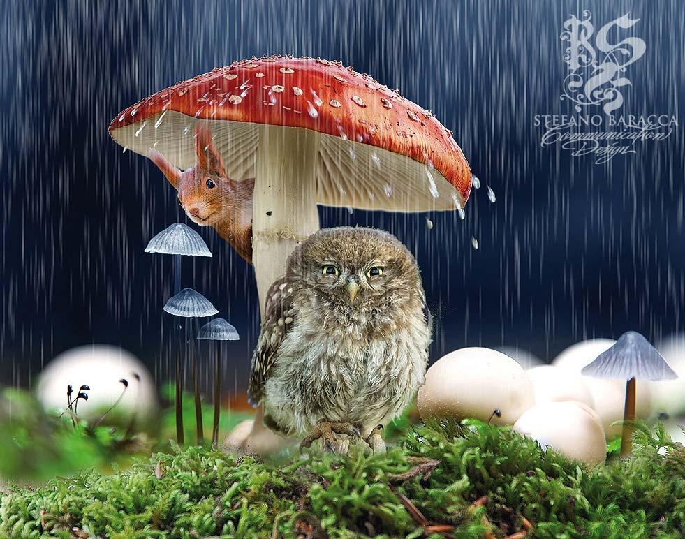 Civetta sotto la pioggia