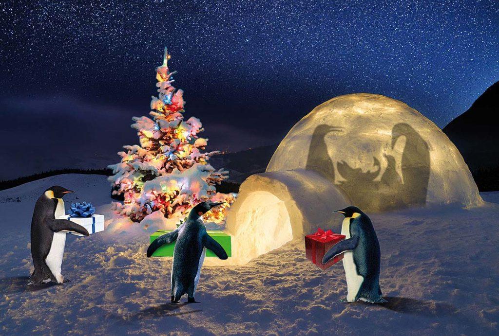 Pinguini a natale