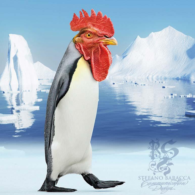 Pinguino galletto