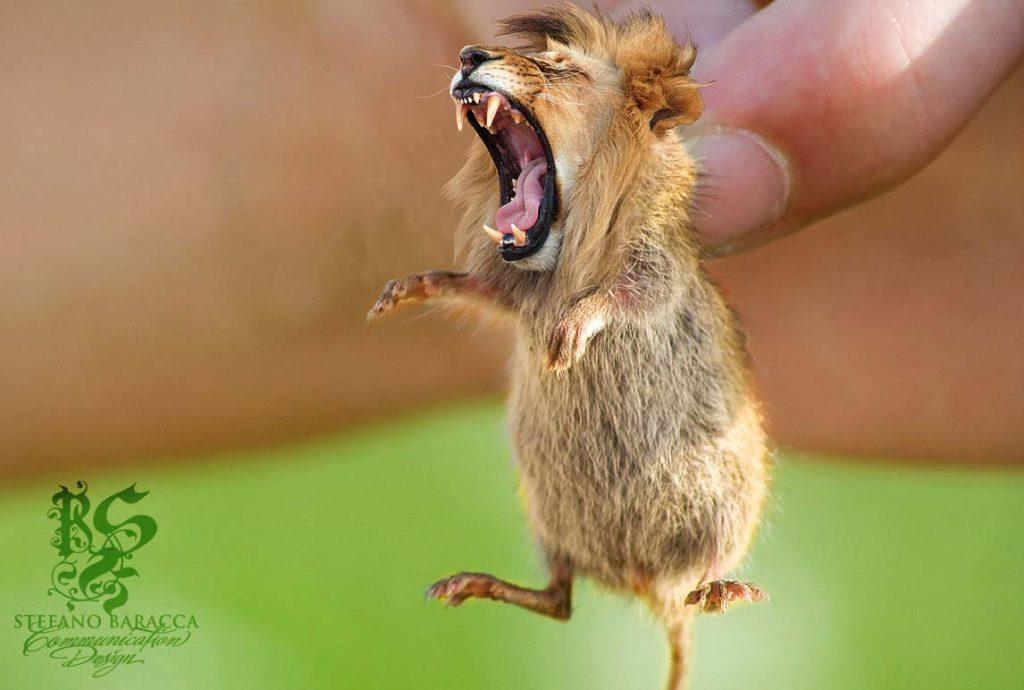 Topo arrabbiato