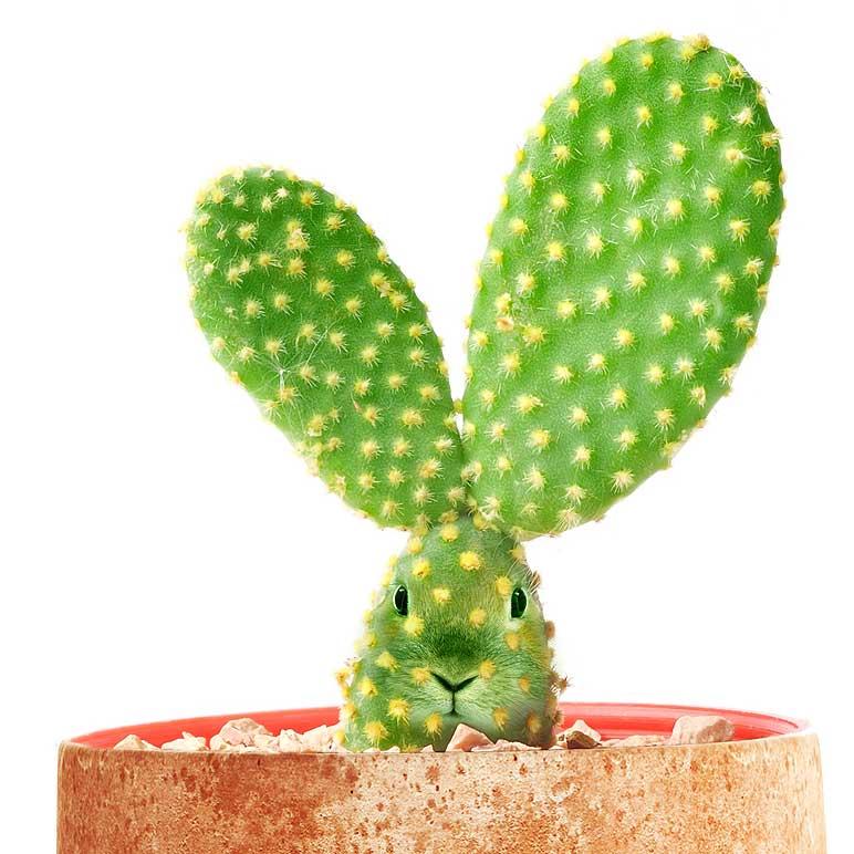 Cactus elaborato con testa di coniglio